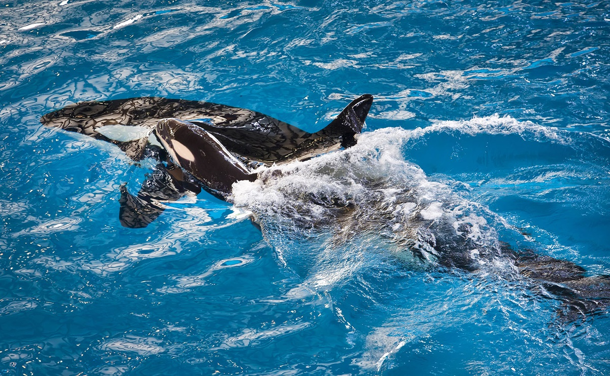ofertas en los parques de SeaWorld por el Black Friday