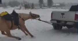 Indigna video de caballo arrastrado por camioneta en Colorado