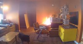 Video. Perro explorador provoca incendio en casa de EU