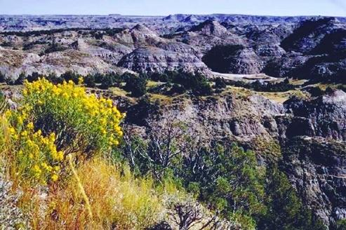 Theodeore Roosevelt National Park