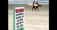 advertencia de animales peligrosos en playa de florida